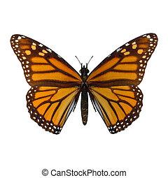 Monarch Butterfly - 3D digital render of a Monarch butterfly...