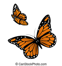 Monarch Butterfly. Vector illustration