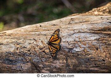 Monarch on Tree Trunk