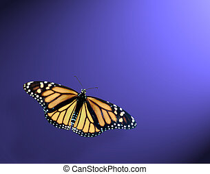 Monarch butterfly in lower left on blue back round with spot...
