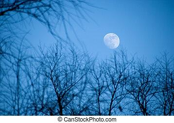 mond, in, der, abend, himmelsgewölbe