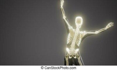 monde médical, humain, radiographie, squelette, balayage