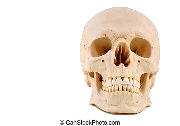 monde médical, skull-1