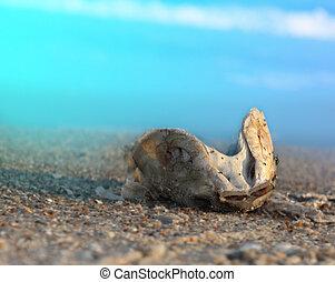 mondiale, pollution, résultat, océan