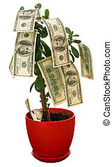 Monetary tree - Dollars growing on the monetary tree...