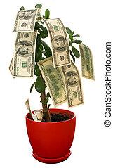 Dollars growing on the monetary tree isolated on white background