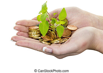 hands with money and plant. representative photo surch for growing capital interest in saving.