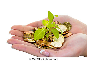 hands with money and plant. symbol photo surch for growing capital interest in saving.