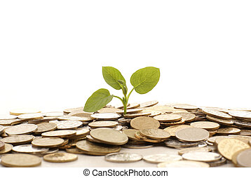 Money - Concept of a plant and a lot of golden coins ...