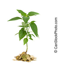 Plant vigorously sprouting from a pile of golden coins - concept for good investments