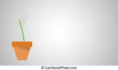 Money plant in pot HD animation