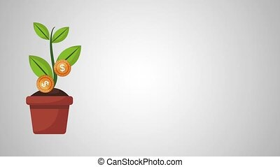 Money plant in pot HD animation - Money plant in pot over...