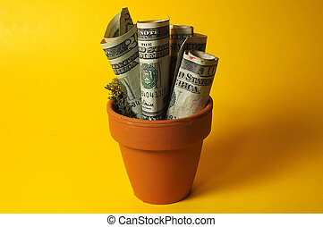 Money Plant - Photo of Potted Money