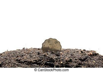 Money Planting