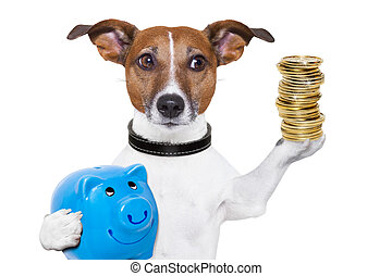 money saving dog - dog holding a blue piggy bank and a stack...