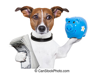 money saving dog
