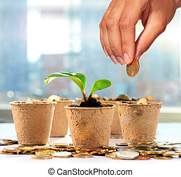 Money tree and coins