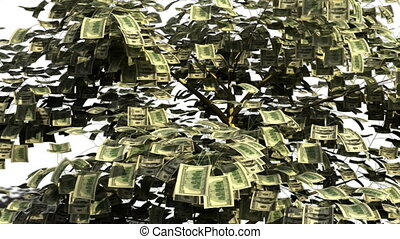 Funny animation of money tree made up of hundred dollar bills shaking and shading the leaves