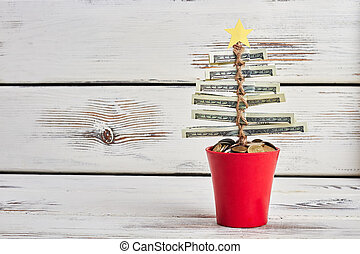 Money tree in pot.