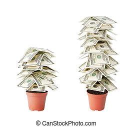 money tree of dollars isolated on white background