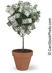 Money Tree on White