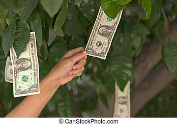 money tree2 - a person pulls money from a tree