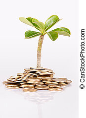 Money under trees or plant - Pile of money (indian coin ) ...