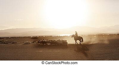 mongol, niño, condujo, manada, de, sheeps