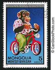 Chimpanzee on bicycle