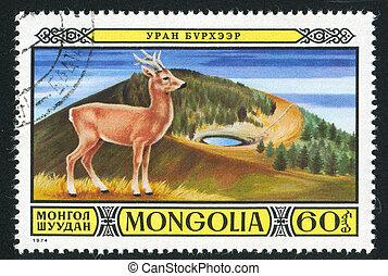 Mongolia deer