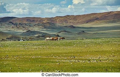 mongolian, 牧草を食べなさい, キャンプ, altai., 群れ
