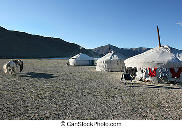 Mongolian yurt - traditional mongolian yurt in sunset