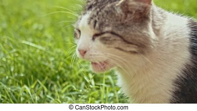 Mongrel cat eating grass shot with copyspace