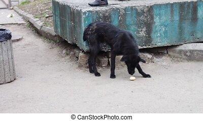 Mongrel dog eats food on the street