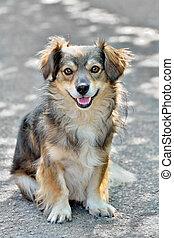 Mongrel dog sitting oh the asphalt