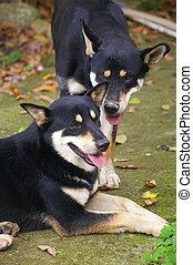 Mongrel dogs