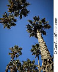 monica, praia, parque, santa, palmen