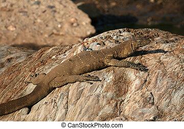 Monitor Lizard - Serengeti Safari, Tanzania, Africa -...