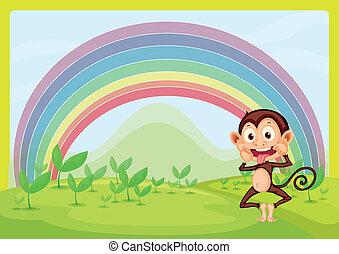 Monkey and rainbow