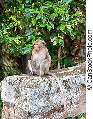 Monkey at Angkor Wat in Cambodia