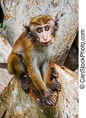 monkey at Sigiriya, Sri Lanka