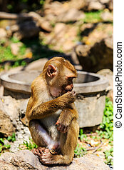 Monkey at sunny day at Monkey Hill, Phuket, Thailand