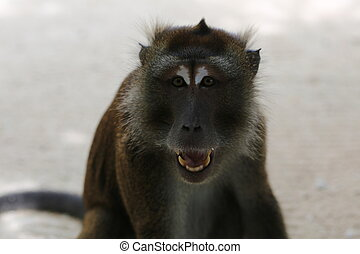 Monkey at the seaside - Exotic animals, tropical...