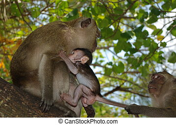 Monkey babe with mother and father