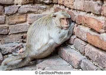 Monkey be sleepy