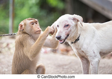 A monkey checking for fleas and ticks in the dog