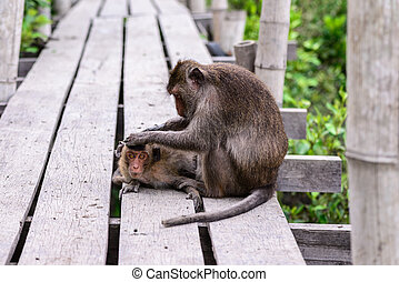 Monkey checking parasite for its mate.
