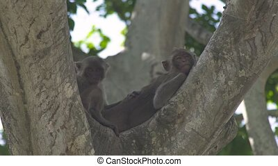 Monkey couple lying on tree branch in green tropical forest. Close up monkeys resting on tree in rainforest in jungle. Wild animal in nature.