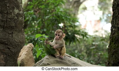 Monkey cub in the jungle - Monkey cub in the wild jungle of...