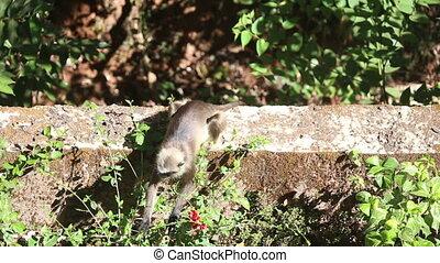 monkey eat flower quit - monkey eat flower and quit